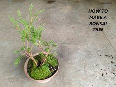 Make A Bonsai- a fun how-to on making a cute little bonsai tree from oil and blue blog