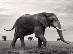 Protective Pachyderm http://photography.nationalgeographic.com/photo-of-the-day/tanzania-elephant-herd/