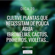 O que gera uma economia de água! #eusoubg #baiadeguanabara #labhidroufrj #ufrj #riodejaneiro #errejota #agua #analisedeagua #plantas #bromelias #cactus #violetas