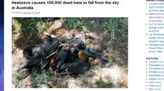 "http://pinterest.com/pin/7248049374329686/ http://pinterest.com/pin/7248049374329690/ CRAZY! 100,000 DEAD BATS FALL FROM THE SKY IN AUSTRALIA! - ""Dahboo77? Carnival Fortune Teller. E.T. says: (Okay, freak, did you have your crystal ball out on this one? What did it say? Could it possibly be the heat wave in Australia? 125 degrees, HellOoOOOoooOoo. But noooooo, it was HAARP, it was Chemtrails and big fans all across Australia. Did you see them? lol lol lol. Isn't that a daisy? lmao =))"""