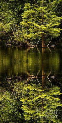 Summer lake scenery