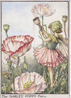 Cicely Mary Barker Flower Fairies print