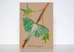 Moths of the Midwest  Luna Moth on Sweet Gum Tree  by LionOfBali