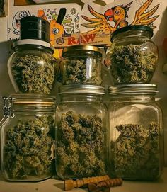 Learn how to get the biggest yields from cannabis plant and what you need to get started, without wasting money! Cannabis Plant, Cannabis Oil, Thc Oil, Marijuana Facts, Smoke Photography, Weed Girls, Weed Art, Puff And Pass, Seed Bank
