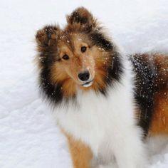 http://www.freekibble.com/amazing-dogs-13/4/