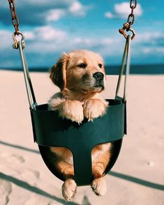 Quarantined Guy Sends His Dog To Buy Cheetos And He Delivers ______________________ Haven't been out for a swing in a while . Super Cute Puppies, Cute Baby Dogs, Cute Little Puppies, Cute Funny Dogs, Super Cute Animals, Cute Dogs And Puppies, Cute Little Animals, Cute Funny Animals, Doggies