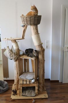 Satisfied purr - natural wood trees for cats - cats - # for . - Happy purring – natural wood trees for cats – cats – # Natural wood tre - Diy Cat Tree, Cat Towers, Gatos Cats, Cat Shelves, Cat Playground, Cat Room, Wood Tree, Pet Furniture, Cat Crafts