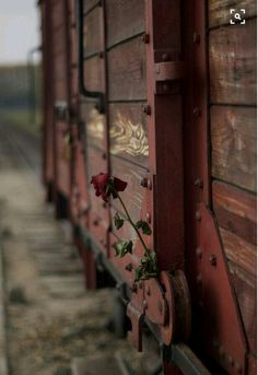 A rose left on the train car which stands on the unloading ramp of the Auschwitz II-Birkenau site. Where left me speechless, lost deep in thought, and R.P all the victims and blessings to the suffered. Kitsch, Water For Elephants, Lest We Forget, Interesting History, World History, Jewish History, Jewish Art, World War Two, Wwii