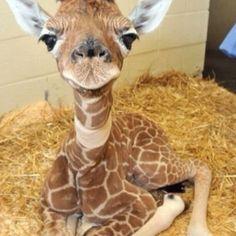 Too Cute Animals | Too Cute!! | Animal Lover