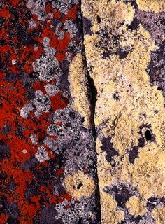 Lichen by Alisdair McGregor Natural Forms, Natural Texture, Patterns In Nature, Textures Patterns, Growth And Decay, Slime Mould, Plant Fungus, Land Art, Mushroom Fungi