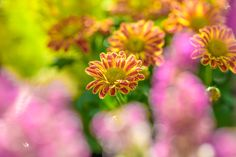 The Beauty Of Flowers - The Beauty Of Flowers