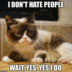 9 Hardy Tips AND Tricks: Friendliest Cat Breeds fluffy cat face. Cute Cats, Funny Cats, Funny Animals, Cute Animals, Animal Funnies, Grumpy Cat Humor, Cat Memes, Grumpy Kitty, Cat Humour