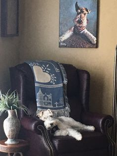 Wirehaired Fox Terrier, Fox Terriers, Wire Fox Terrier, Schnauzer, All Dogs, My Animal, Beautiful Dogs, Dog Life, My Best Friend