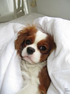 All snuggled up in bed !
