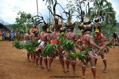 https://flic.kr/p/wBsY7X | Kutumb fest | For the year 2015, Kutubu Kundu Festival in PNG will be bigger and better.