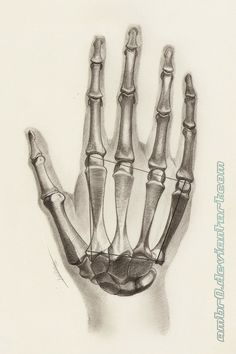 Hand Anatomy Study by on DeviantArt HB, Kneaded Eraser, Mechanical Pen Eraser B Hand Anatomy, Skeleton Anatomy, Anatomy Study, Anatomy Art, Anatomy Sketches, Anatomy Drawing, Skeleton Hands Drawing, Tattoo Main, Human Figure Drawing