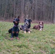 Hunde Foto: Nicole und Freya und die Jungs - Die drei vom Altenberg.jpeg Hier Dein Bild hochladen: http://ichliebehunde.com/hund-des-tages  #hund #hunde #hundebild #hundebilder #dog #dogs #dogfun  #dogpic #dogpictures