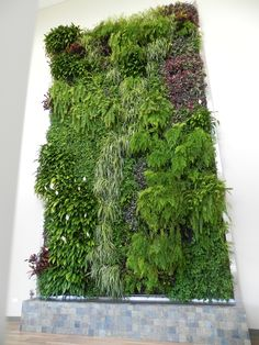 Green Wall at Ambius branch in Des Plaines, IL
