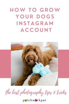 Hey dog lovers! Are you ready to document your pups daily lives with the trendiest new photo filters and edits?You're in luck because we are back again with the second post in our Grow Your Dog's Instagram Series. In this post we will go over all things photography! So, if you're ready to step up your amateur photography status - keep reading!