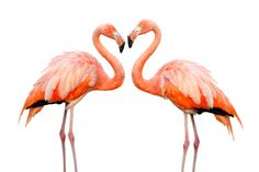 fun facts and trivia about flamingos the spruce - HD 1280×853