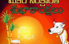 Sankranti Wishes In Telugu, Happy Sankranti, Divine Mercy Image, Happy Pongal, Allu Arjun Images, Facebook Dp, Stickers, Wallpaper, Fictional Characters