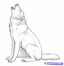 Image result for anatomy of wolf sitting