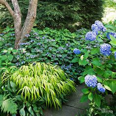 An empty, shade-filled spot can be the perfect place to play up the contrast in color and foliage between just a few types of plants. Here, delicate lacecap hydrangea pairs with the full blooms of 'Endless Summer', and is complemented by the brightening effect of golden Japanese forestgrass.