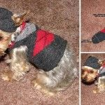 Make A Dog Outfit Using A Sock