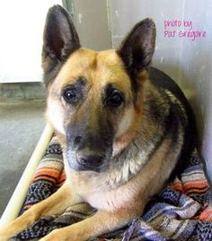 Beautiful senior crying in her kennel for family who walked away