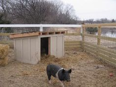 A huge winter storm is on it's way, and the three little pigs decided to destroy their straw bale house. So this weekend a new house was m. Pig Farming, Backyard Farming, Backyard Barn, Pig Fence, Pig Shelter, Kune Kune Pigs, Raising Farm Animals, Pot Belly Pigs, Small Pigs