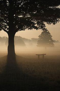 in Richmond Park✔zϮ Beautiful World, Beautiful Places, Beautiful Pictures, Richmond Park, Richmond London, Belleza Natural, Belle Photo, Nature Photos, Beautiful Landscapes