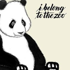 I Belong to the Zoo - Sana (Official Music Video) Apple Music, Album Covers, Music Videos, Teddy Bear, Songs, Animals, Fictional Characters, Wallpaper, Sash