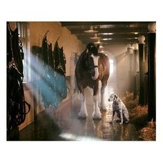 One of my faves! Clydesdale horses are so majestic!