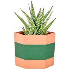 Spiky Succulent, Garden Seating, East Sussex, Hexagon Shape, Terracotta Pots, Site Design, Potted Plants, Indoor Outdoor, This Is Us