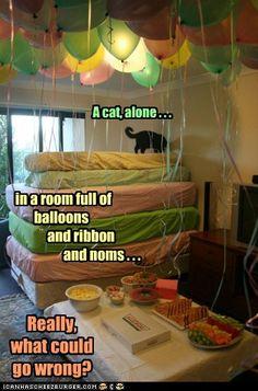 A cat, alone...