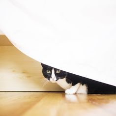 I'm not here. You can't see meh.
