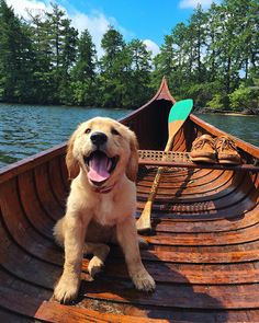 Golden retriever pup AND a cedar canoe? Sign me up! Golden retriever pup AND a cedar canoe? Sign me up! Perros Golden Retriever, Chien Golden Retriever, Retriever Dog, White Golden Retriever Puppy, Animals And Pets, Baby Animals, Funny Animals, Cute Animals, Funny Dogs