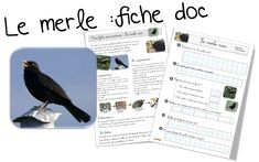 Documentaires - Bout de gomme Migration, Merle, Animals For Kids, Recherche Google, Edm, Learning, School, Animal Classification, Animal Science