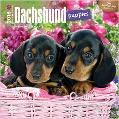 Dachshund Puppies 2016 Mini 7x7 (Multilingual Edition): Browntrout Publishers: 9781465040725: Amazon.com: Books