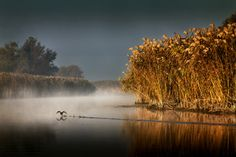 People of the Delta | Sorin Onisor
