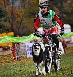 Having fun with my dog. Switzerland Bern, Mountain Biking, Husky, Have Fun, Bicycle, Dogs, Instagram, Bicycle Kick, Bike