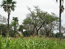 L'agroforesterie est un mode d'exploitation des terres agricoles associant des plantations d'arbres dans des cultures ou des pâturages1,2 . Le mot dérive d'un néologisme anglophone (« agroforestry ») apparu dans les années 1970. Il s'agit d'un terme moderne ayant un usage proche de la complantation, technique culturale traditionnelle.