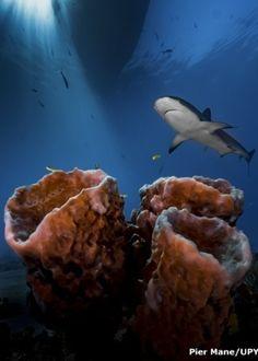 """Pier Mane, da África do Sul, recebeu o título de Fotógrafo Submarino Iniciante do ano por sua imagem """"Three Pillars"""", captada nas Bahamas"""