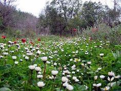 LEBANON, spring FLOWERS