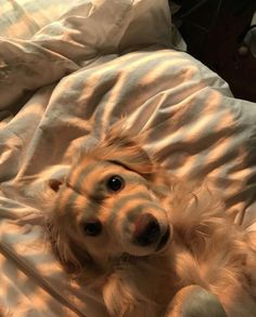 Stunning hand crafted golden retriever accessories and jewelery available at Paws Passion Shop! Represent your golden retriever pup with our merchandise! Cute Baby Animals, Animals And Pets, Funny Animals, Animal Babies, Small Animals, Animals Photos, Cute Puppies, Cute Dogs, Dogs And Puppies