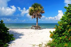Honeymoon Island State Park in Dunedin near Clearwater and Tampa