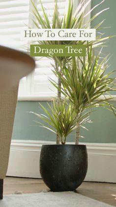 Indoor Tree Plants, Indoor Palm Trees, Indoor Tropical Plants, Indoor Palms, Indoor Garden, Palm Plant Care, Palm Tree Care, Palm Tree Plant, House Plant Care