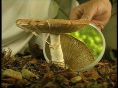 Op een grote paddenstoel rood, met witte stippen... Ken je dat liedje nog? Het gaat over een paddenstoel: de vliegenzwam! Een paddenstoel is eigenlijk de vrucht van een schimmel. Onder de grond groeien schimmeldraden en boven de grond een paddenstoel. Stuffed Mushrooms, Outdoor Decor, Autumn, School, Kids, Children, Boys, Fall, Children's Comics