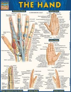 EMT: Emergency Medical Technician Laminated Study Guide - BarCharts Publishing Inc makers of QuickStudy Hand Therapy, Physical Therapy, Occupational Therapy, Geometric Formulas, Circle Theorems, Nurse Drawing, Hand Anatomy, Body Anatomy, Conduct Disorder