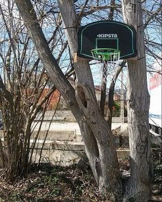Olot Catalunya.  @hello_brain Thanks for sending!      #basketballcourt #basketball #ballislife #tree #backboard #basket #woods #ilovethisgame #basquet #kipsta #catalonia #hoopdreams #nothingbutnet #nature #basketballneverstops #baloncesto #olot by basketball.courts